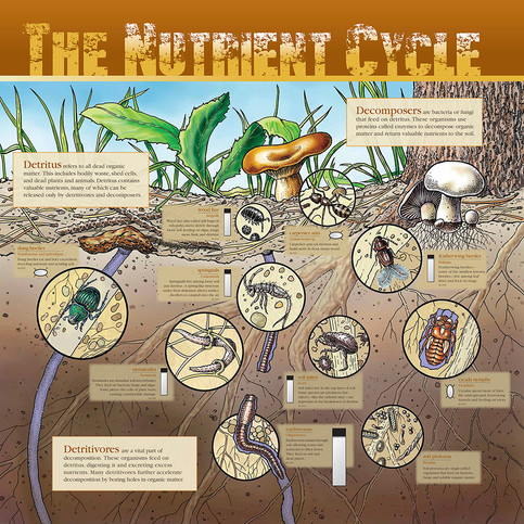 The Nutrient Cycle Interpretive Signage