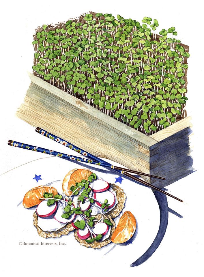 Unami Asian Blend Microgreens