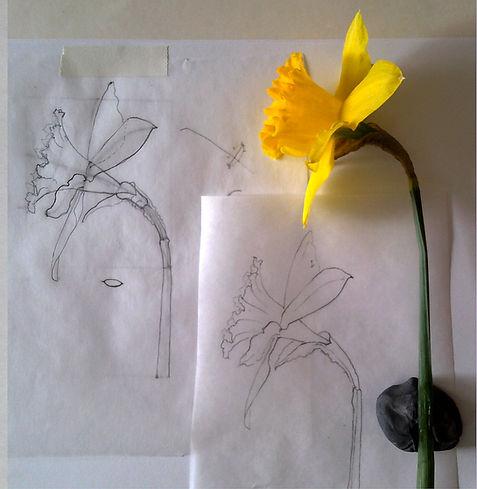 Daffodil fleshed out_WIX.jpg