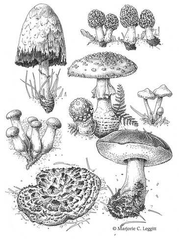 Fungi of Colorado