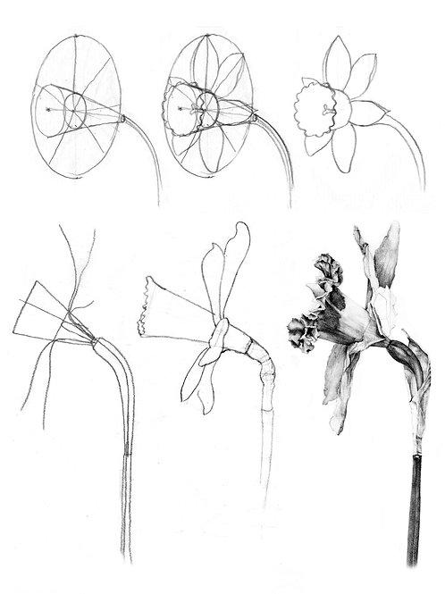 Botanical Illustration: Perfecting Perspective • 11/13-15, 2021