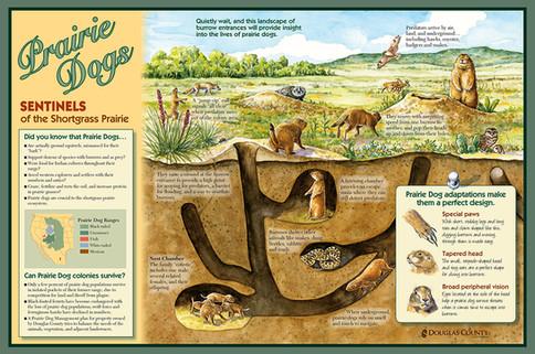 Prairie Dog Community in the Shortgrass Prairie