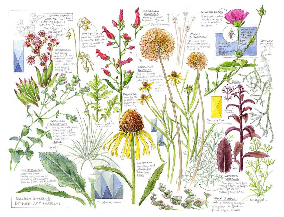 """Denver Art Museum Sensory Garden Field Guide """"Centerfold"""""""