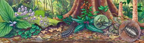 Life on the Rainforest Floor