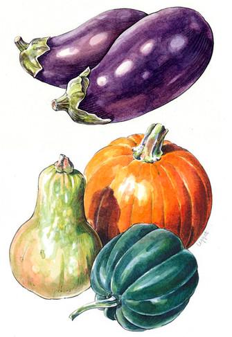 Eggplant & Winter Squash