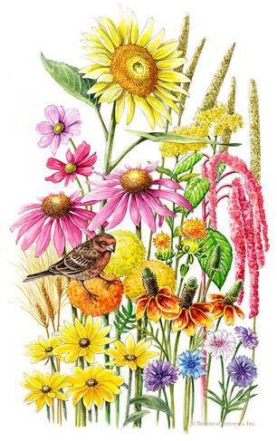 Songbird Delight Flower Mix