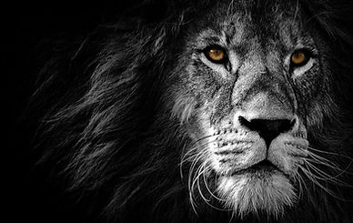 lion-4118576_1920-1024x647.jpg