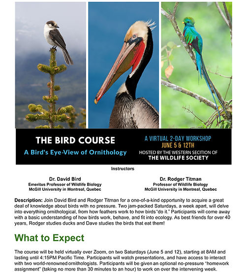 The Bird Course_Page_1.jpg