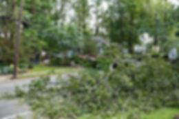 iStock-459227239 FALLING TREE - FINAL.jp