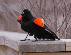 Ask Professor Bird