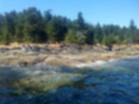 MUSINGS Ruckle-Provincial-Park-Credit-SH