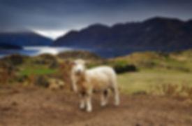 iStock-518776421 - NEWZEALAND 2 - FINAL.