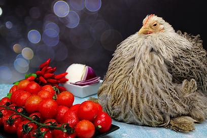 chicken-5868078_1920.jpg