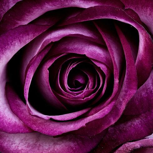 rose pour thie au feminin.jpg