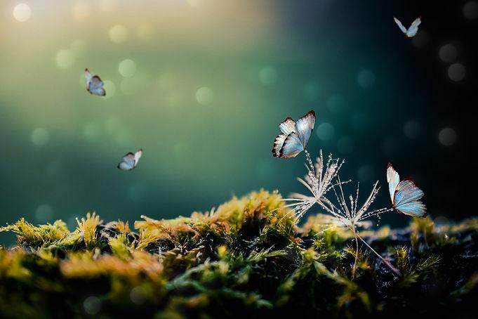 papillons_je_sais_pas_où_peut-être_en_