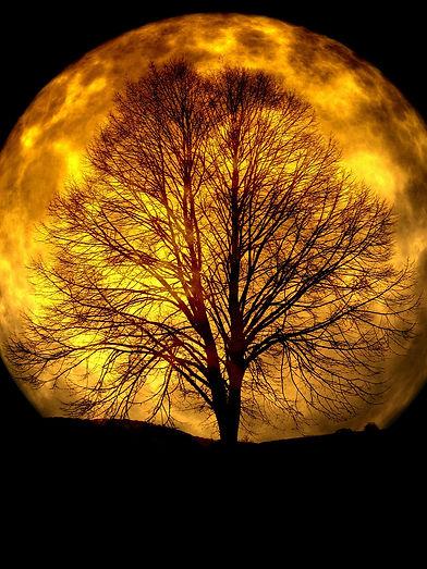 arbre_et_lune_je_sais_pas_où_mais_trop_