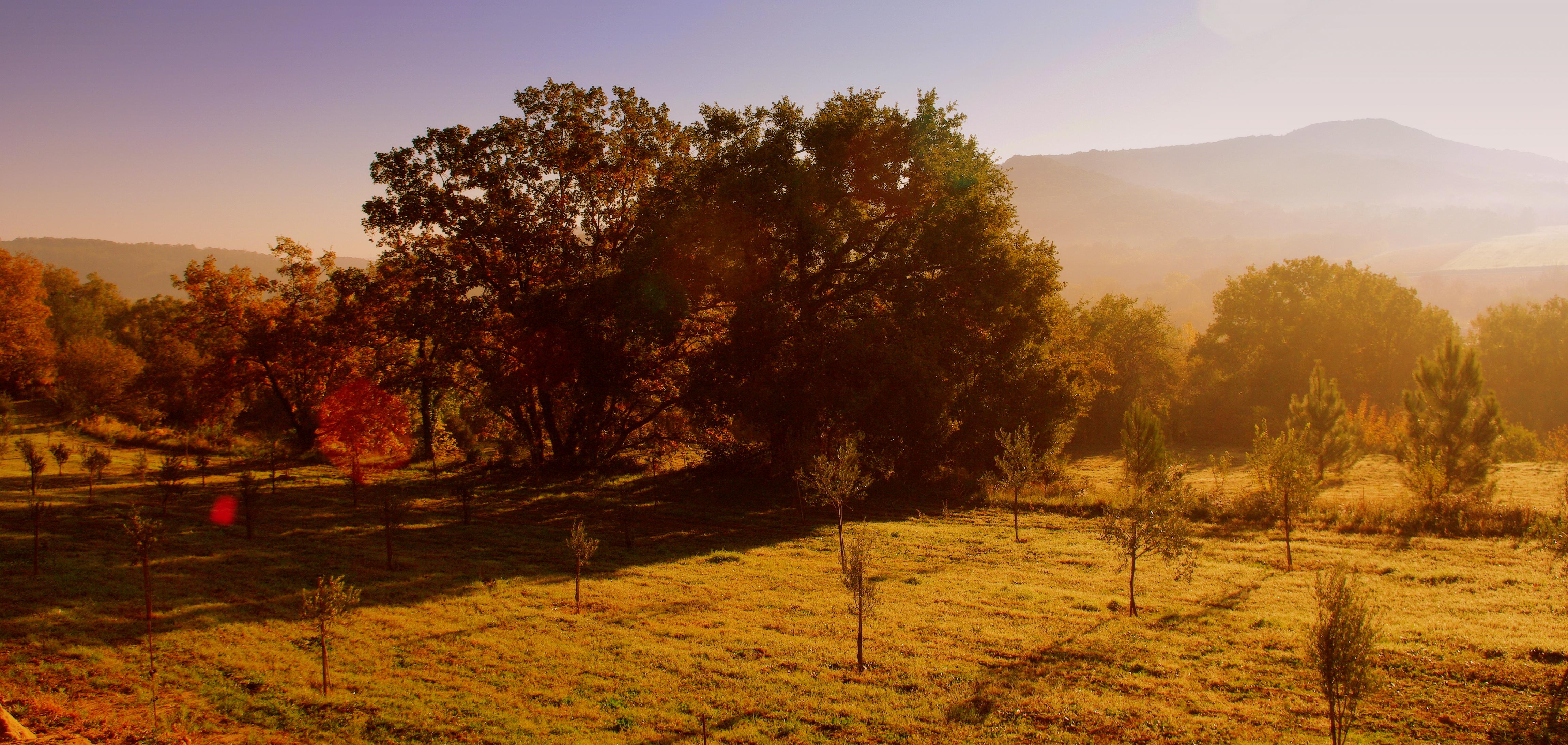 Anwesen im Herbstlicht mit Ost Sicht