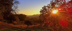 Levé de soleil sur les oliviers