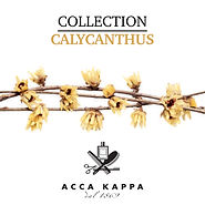 ACCA KAPPA (Calycanthus).jpg