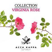ACCA KAPPA (Virginia Rose).jpg