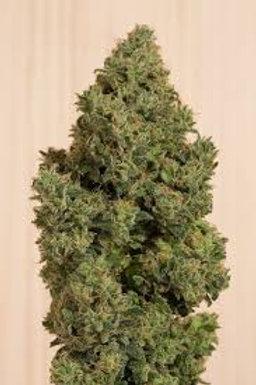 Sundae Driver Marijuana