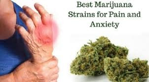 BEST MEDICAL MARIJUANA STRAINS FOR ANXIETY