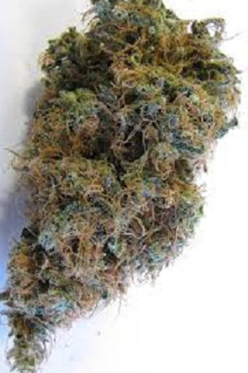 Knock out WEED strain