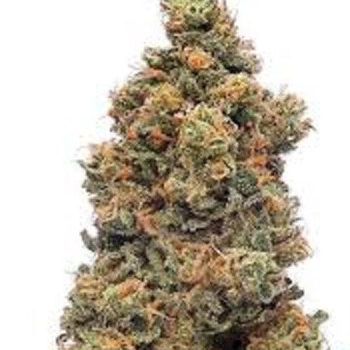 XJ-13 weed