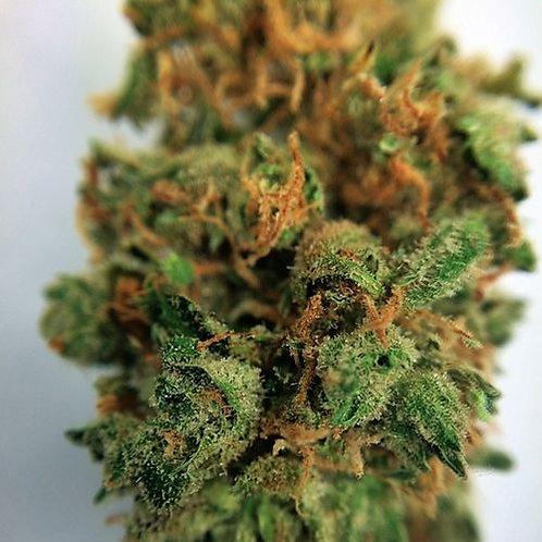 Mendo Queen cannabis