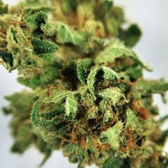 Harvest Moon marijuana strain