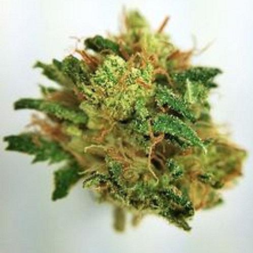 JazzyKush marijuanastrain