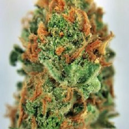 Yumboldt Weed