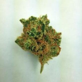 Master P marijuana strain