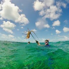 Spear fishing for crawfish