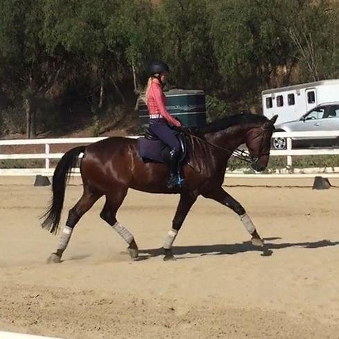 Cordi 🖤 headed to the barn! Finishing p