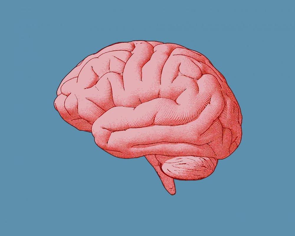 Día Mundial del Cerebro, Farmacia Sangüesa (Farmacia Tomás I. López Santamaría, Navarra)