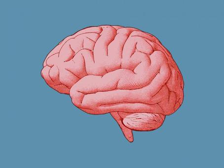 Día Mundial del Cerebro en Sangüesa