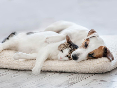 Prep Your Pets For The Big Move