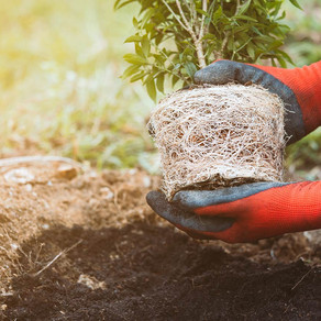 How To Plant A Tree In Your Yard
