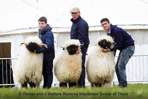 Reserve interbreed group of three.jpg
