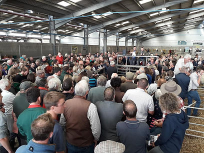 Crowd at show and sale 2019.jpg