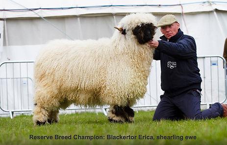 Reserve breed champion Devon county show