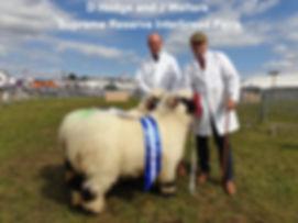 Dorset show reserve interbreed pairs 201