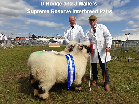 Dorset show reserve interbreed pairs 201