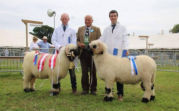 Dorset show champion and reserve 2018.jp