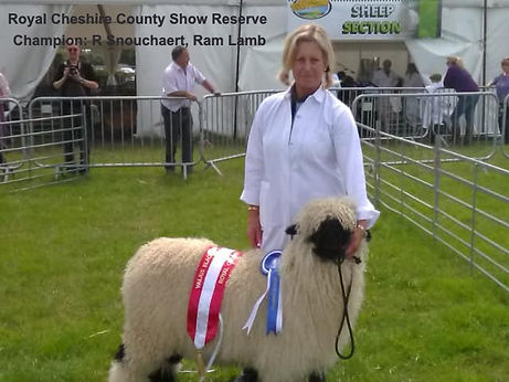 Cheshire%20show%20reserve%20breed%20cham