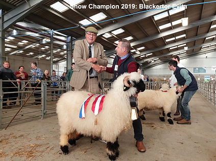Show and Sale Champion 2019 Valais Black