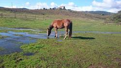 Cavallu & Co