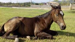 Cavallu&Co