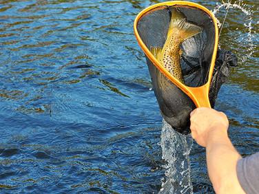 Fint ädelfiske i runt fjällbyn Storsjö
